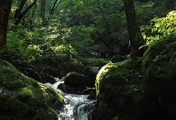3.天然の湧き水が豊富