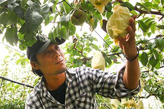 3.極力、減農薬に努める