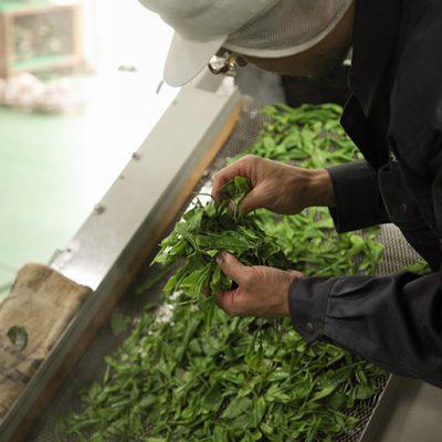 雪に包まれた茶畑でじっくりと旨みを蓄えた在来種の茶葉を使用