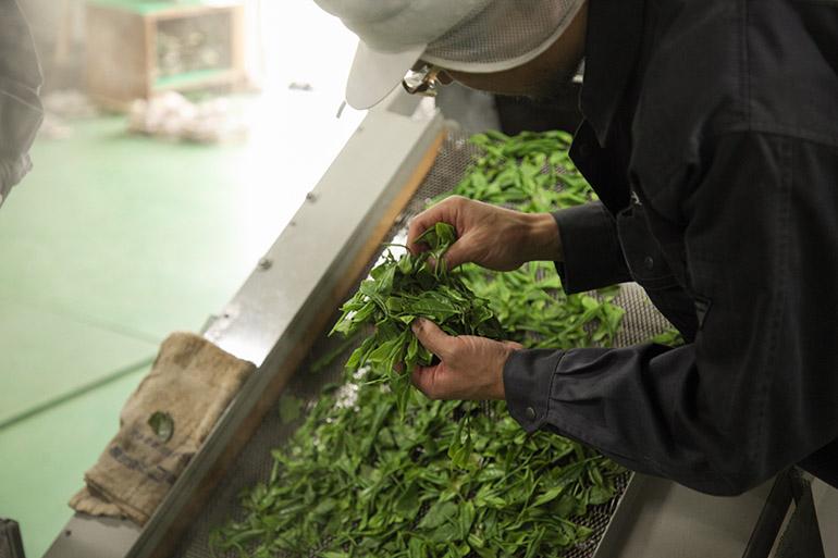 6代目が復活させた100年前の村上紅茶