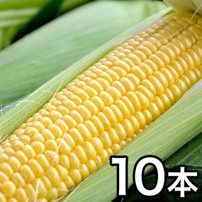 津南産とうもろこし(黄色 2Lサイズ) 10本セット