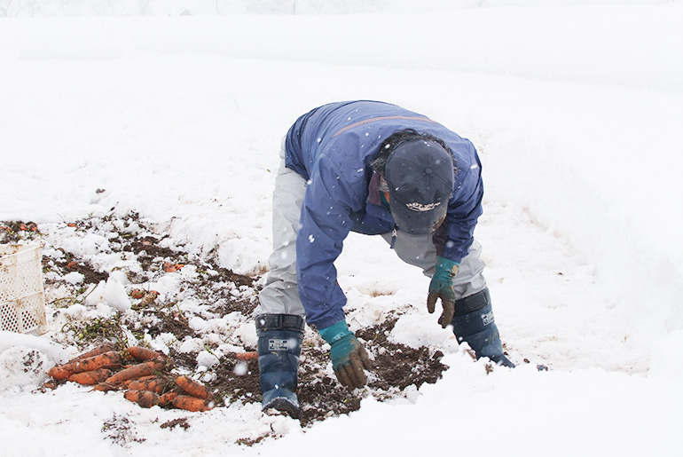 掘り起こしは人の手で