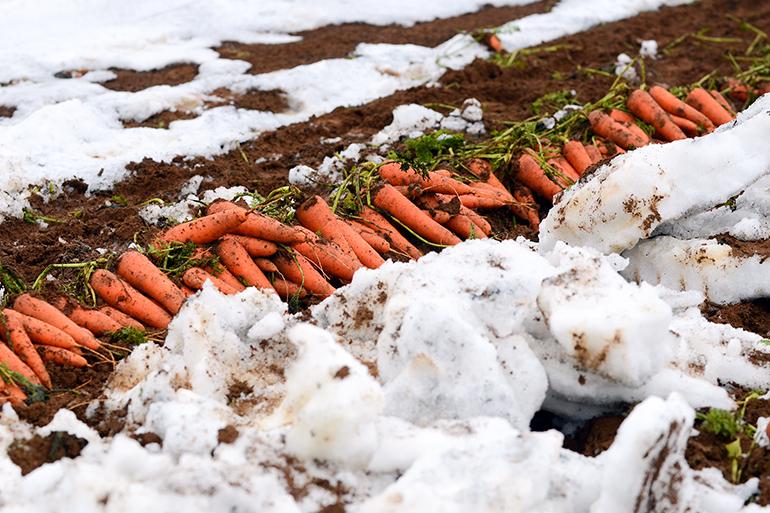 雪が保つ絶妙の湿度バランス