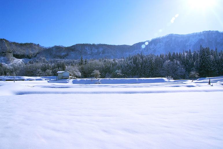 豪雪地帯が育む美味しいアスパラガス