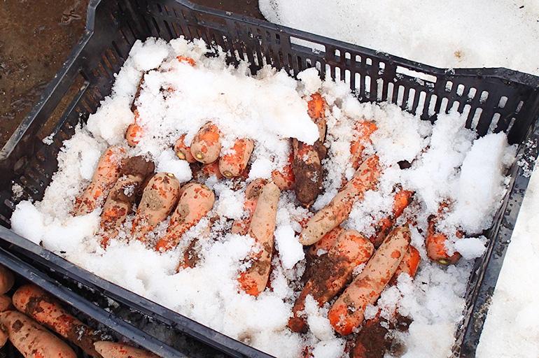 雪国新潟ならではの逸品!自然な甘さの雪下にんじん