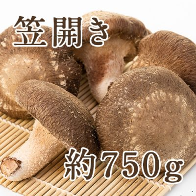【家庭用】生しいたけ(笠開き) 約750g