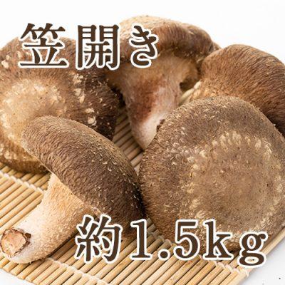 【家庭用】生しいたけ(笠開き) 約1.5kg