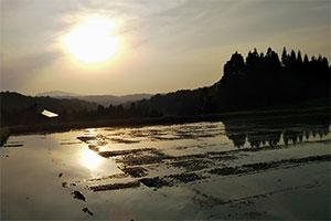 2.お米を熟させる激しい寒暖差