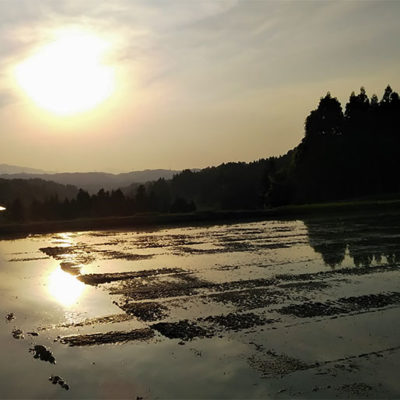 昼夜の激しい寒暖差がお米を甘く登熟させる