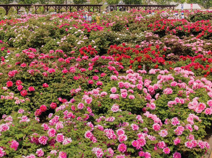 五泉市は「花のまち」