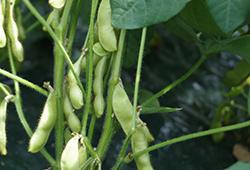 4.「肴豆」(10月上旬)