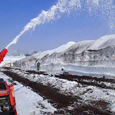 魚沼産 無農薬栽培 熟成にんじん(土付き)・雪下にんじん&ジュースセット
