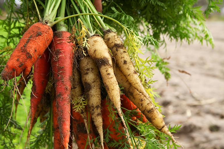 有機質をふんだんに使用した砂地栽培