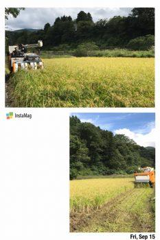 東山ファーム 稲刈り風景