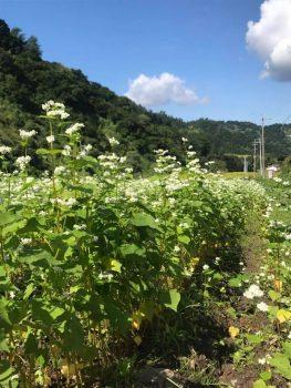 東山ファーム そば開花