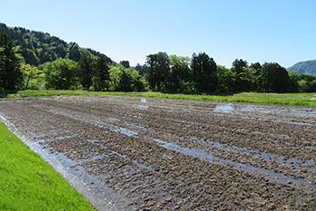 2.浸透率の良い肥沃な土壌