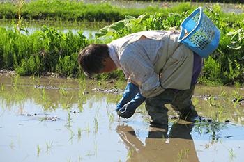 3.根に活力を与える有機質の肥料