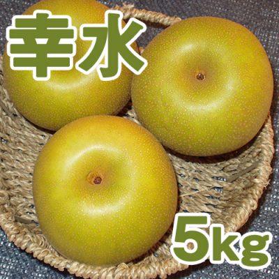 幸水5kg(10~14個入り)