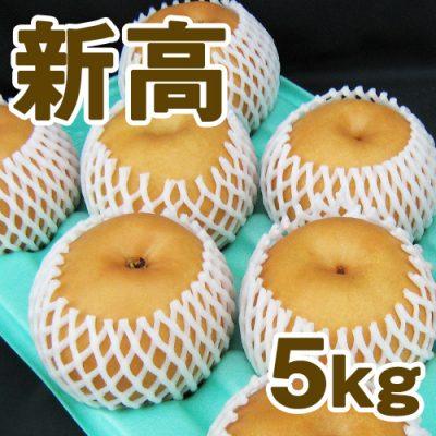 新高5kg(6~9個入り)