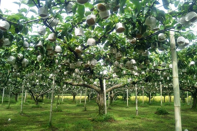 果物作りに適した加茂市