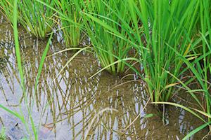 3.綺麗な湧き水