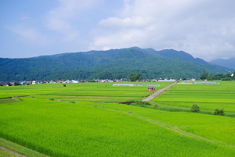 地域全体で減農薬・減化学肥料に努める