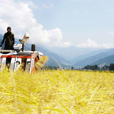 食の安全に配慮された特別栽培米