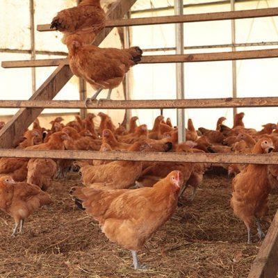地鶏卵の詰め合わせ