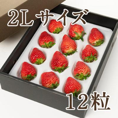 越後姫 2Lサイズ 12粒(化粧箱入り)