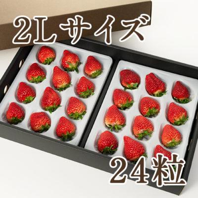 越後姫 2Lサイズ 24粒(化粧箱入り)