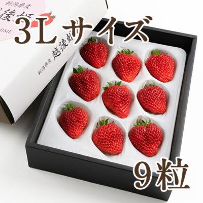 越後姫 3Lサイズ 9粒(化粧箱入り)