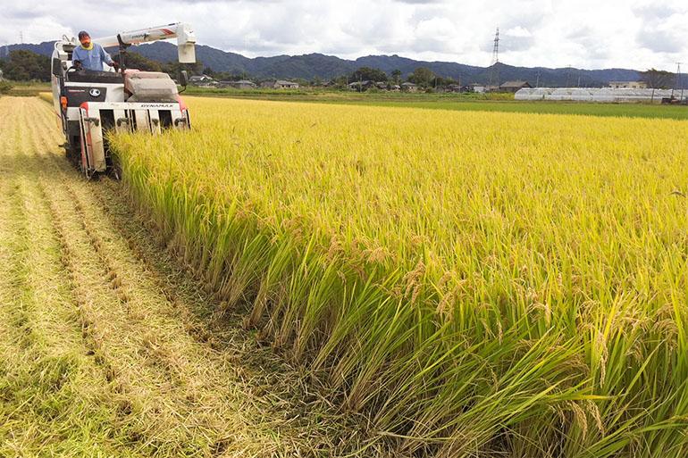 減農薬・減化学肥料にこだわったお米作り