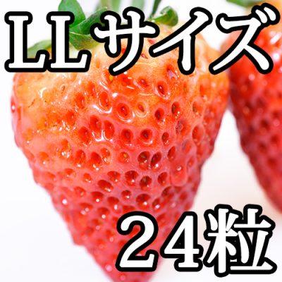 越後姫LLサイズ(24粒入り)