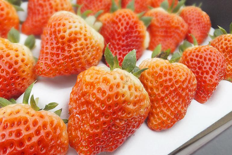 摘みたてフレッシュ苺をお届けします!