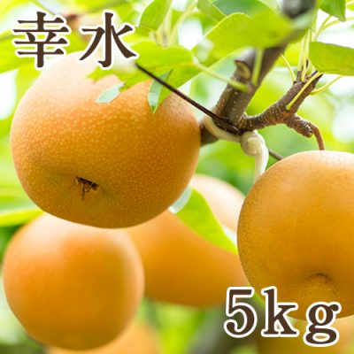 幸水 5kg(8~14玉)