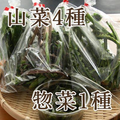 朝採り天然山菜4袋+山菜惣菜1種 詰め合わせ