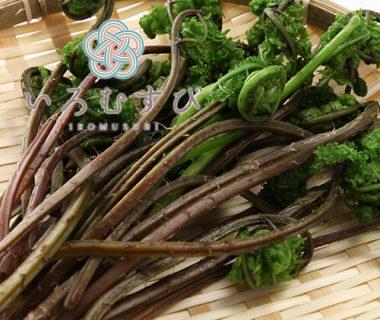 予約注文:新潟産 朝採り天然山菜(ワラビ・フキ・コゴミ)