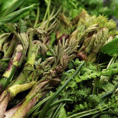 山菜本来の「エグミと深い味わい」をお楽しみ下さい!
