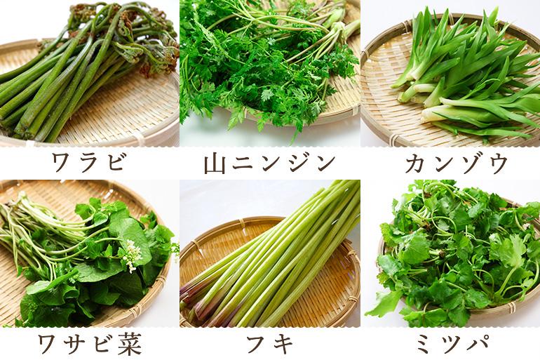 12種類の中から旬の山菜をお届けします!