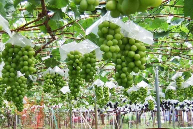 自然の本来の力を妨げずに作物を育てる