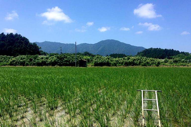 特別栽培米よりも特別なお米とは!?