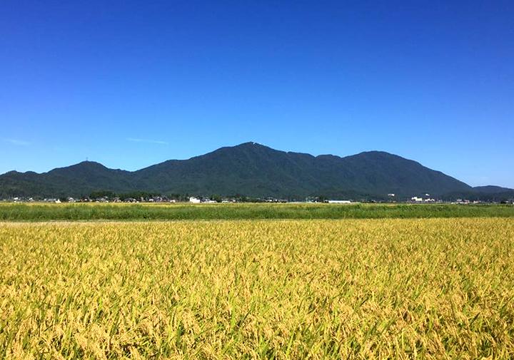 安心・安全を貫いた燕市職人の特別栽培米!