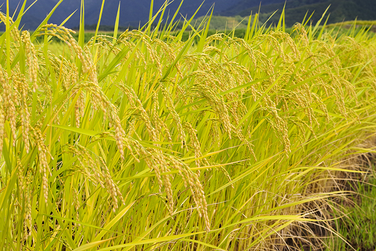 有機質・ミネラル肥料を使ったこだわりの栽培