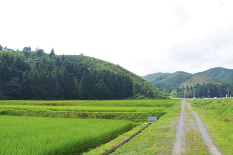 3.減減農法にこだわった「特別栽培米」