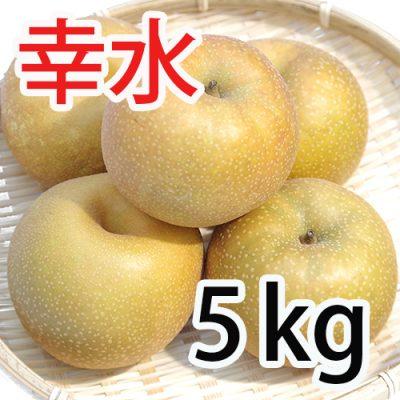 幸水 5kg (9~14玉入)
