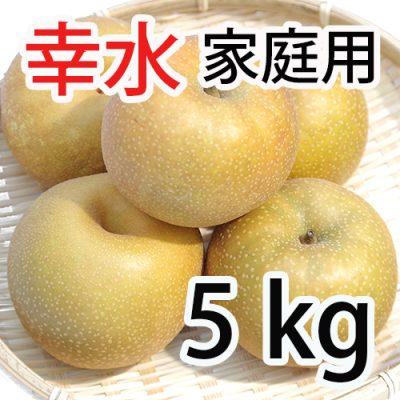 家庭用 幸水 5kg (9~14玉入)