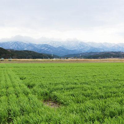 安全で美味しい農産物を生産する「JAささかみ」