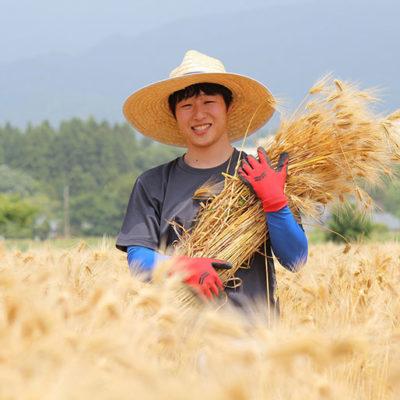 大麦を栽培している生産者さん