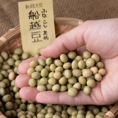 新潟市西蒲区産の船越豆