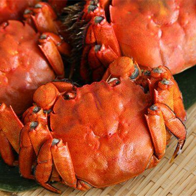 日本の上海蟹といわれる「モクズガニ」